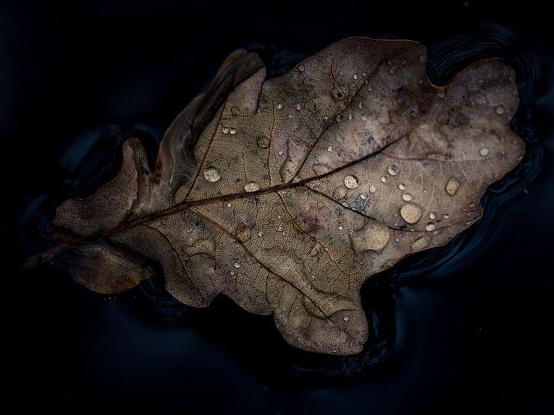 Leaf van Lex Schulte