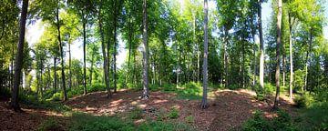 Buchenwaldpanorama van