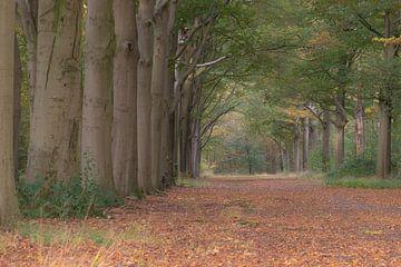 Allee der ruhenden Bäume von Tania Perneel