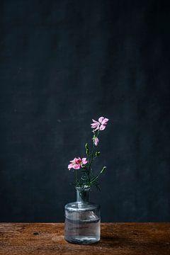 Fotodruck von rosa Blume in Glasvase auf einem dunkelblauen Hintergrund von Jenneke Boeijink