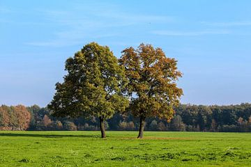 Twintree van Niels Klein Baltink
