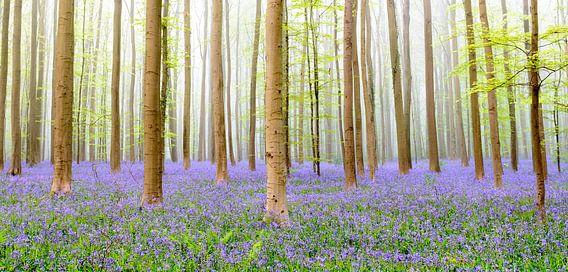 Hyacinten bos van Sjoerd van der Wal