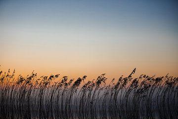 Rustgevende Zonsopgang met Silhouetten van Riet van Susanne Ottenheym