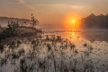lever de soleil doré sur l'étang de la teut dans le Limbourg, Belgique sur Fotografie Krist / Top Foto Vlaanderen
