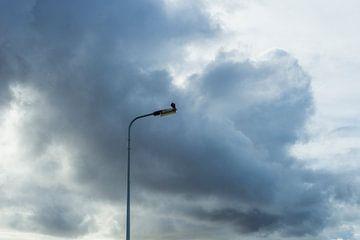 Valk rustend op een lantaarnpaal van Yorrit v.d.Kaa