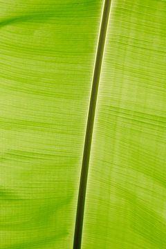 Bananen blad van Pieter Tel
