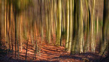 Spreekwoord: Door de bomen het bos niet meer zien van Georges Hoeberechts