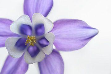 paarse bloem van gj heinhuis