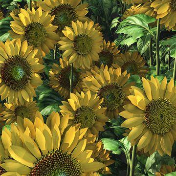 Landschaft – Sonnenblumen von Jan Keteleer