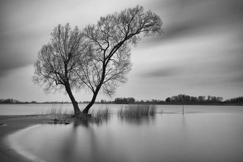 Arbre dans l'eau au bord de la rivière De Lek, Hollande méridionale sur Jan van der Vlies