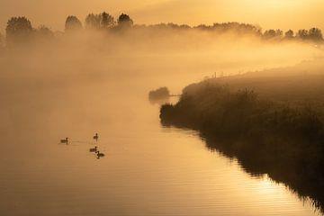 Eenden op de rivier bij zonsopkomst van Anges van der Logt