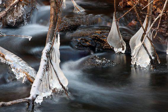 The Icecubs