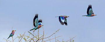 Scharrelaar vliegt weg in Serengeti von Arjan Warmerdam