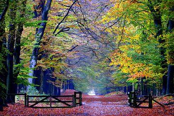 Herfst bij Planken Wambuis van Herman van Alfen