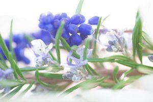 Zarte blau töne des Frühjahrs aus Blüten und Blättern