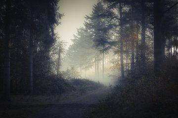Een mistige ochtend in het bos van Mart Houtman