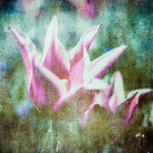 Tulp vintage van