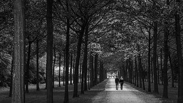 Lover's Lane von Bob Hartemink