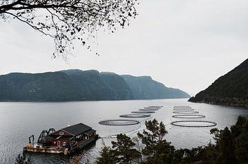 Lachsfarm Norwegen von Mike Landman