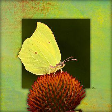 Vlinder | Citroen vlinder van Dirk H. Wendt