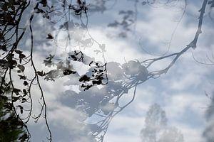 Reflectie bomen van Annet van Esch