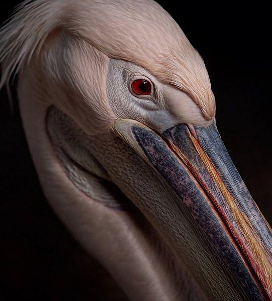 Portrait pelikaan van Ron Meijer