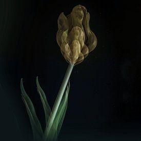 Tulp van bird bee flower and tree