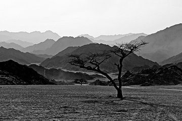 Desert in Egypt sur Yorda Cornelissen