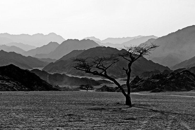Woestijn Egypte van Yorda Cornelissen
