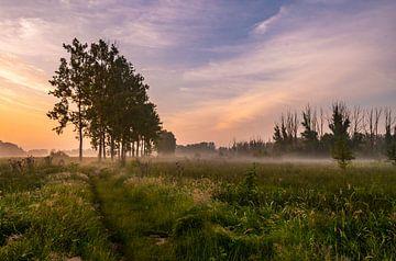 Misty Morning van Kim Lijnders