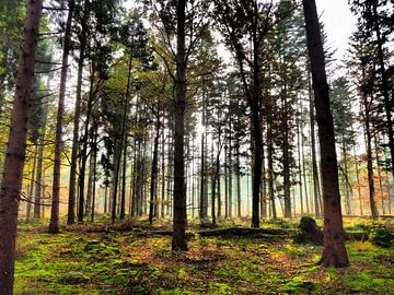 Een bos vol bomen van Daan van Gils