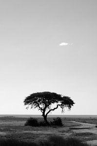 Africa tree van