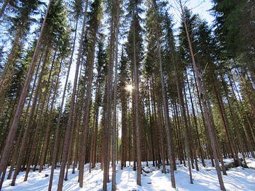 Zon Bos Bomen van Semra Ballast-van Engen