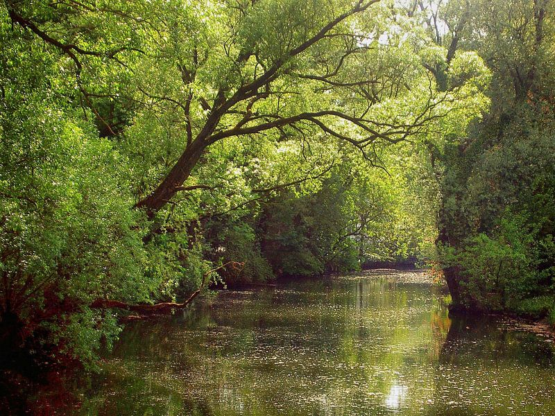 Am Fluß  van Ilona Picha-Höberth