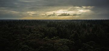 Uitzicht over het bos van Martzen Fotografie