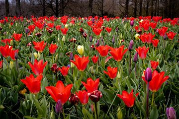 Blumenfeld von Anouk Snijders
