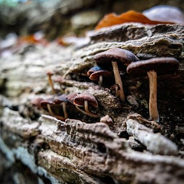 Mushroom family sur