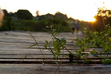 Sonnenuntergang im Regenwald von rene marcel originals