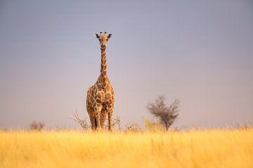Giraffe op savanne van Chris Stenger