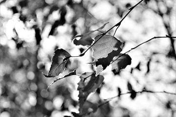 Zwart Wit met Tegenlicht von DoDiLa Foto's