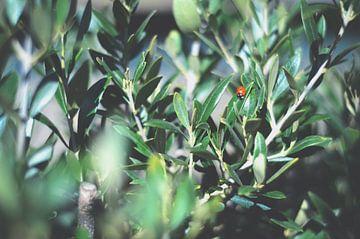 Peek of Nature /  Kijk Op De Natuur van Daphne Groeneveld