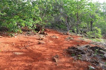 Terra Cora, rode aarde Bonaire. van Silvia Weenink