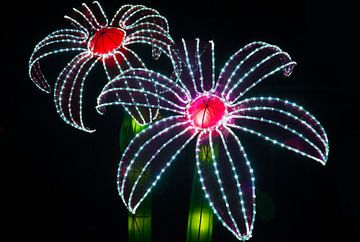 Lightflowers van Brian Morgan