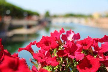 Bloemen in Italië van Charissa Oudejans