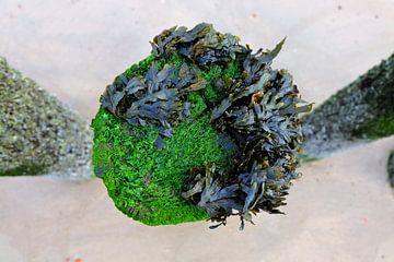 Golfbreker met zeewier. van Marian Klerx