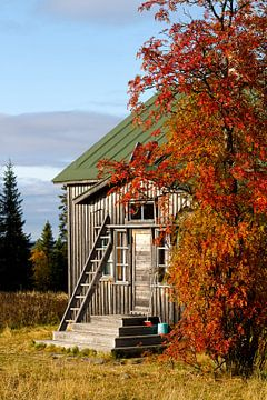 Farming in Finland van Petra ter Veer