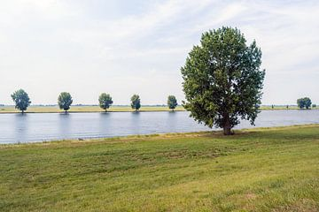 Boom aan rivieroever van Ruud Morijn
