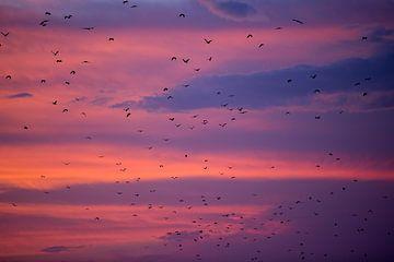 Vleermuizen vliegen weg tijdens zonsondergang - Flores Indonesie van Michiel Ton