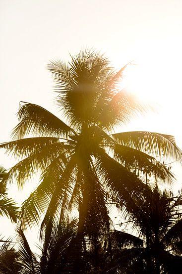 Palmboom in Vietnam