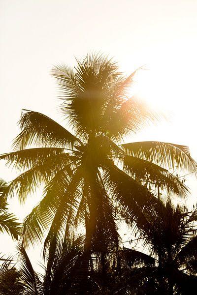 Palmboom in Vietnam van Gijs de Kruijf